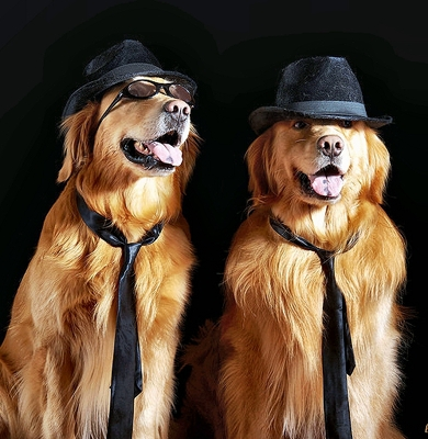 Blues Brothers Dogs